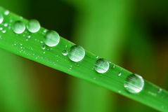 Pingos de chuva na grama fotografia de stock royalty free
