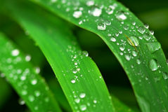 Pingos de chuva na grama Fotografia de Stock