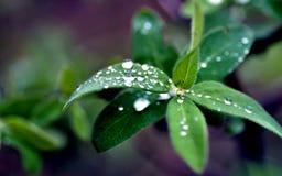 Pingos de chuva na superfície das folhas verdes, close-up imagens de stock