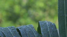 Pingos de chuva no close up das folhas de palmeira video estoque