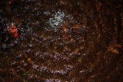 Pingos de chuva que caem em uma lagoa imagem de stock royalty free