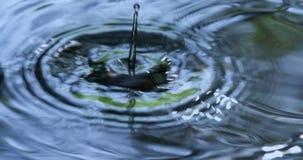 Pingos de chuva que caem na água video estoque