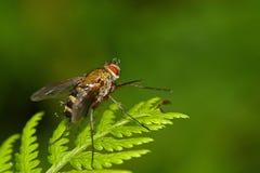 Pingos de chuva travados em uma mosca Imagem de Stock Royalty Free