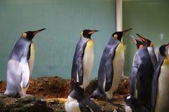 pingouin Photographie stock libre de droits
