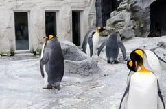 pingouin Photo libre de droits