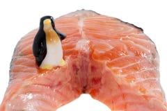 Pingouin affamé et bifteck saumoné. Photos libres de droits