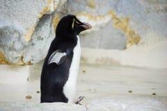 Pingouin au zoo photo libre de droits