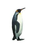 Pingouin d'empereur d'isolement avec le chemin de découpage Photo libre de droits