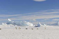 Pingouin d'empereur sur la neige Photographie stock libre de droits