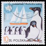 Pingouin d'expositions Photos stock