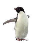 Pingouin d'isolement Adelie avec le chemin de découpage photo stock