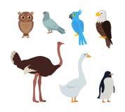 Pingouin d'oie d'autruche d'Owl Dove Blue Parrot Eagle Photo stock
