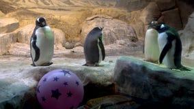 Pingouin dans un zoo banque de vidéos