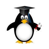Pingouin de graduation Photographie stock libre de droits