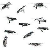 pingouin de humboldt images stock