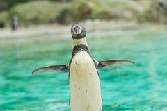 Pingouin de l'Antartic Photos libres de droits