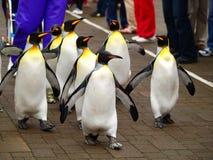 pingouin de roi Photo libre de droits