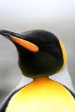 Pingouin de roi faisant face au vent et à la neige Photo libre de droits