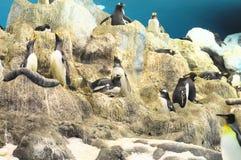 Pingouin noir et blanc Image libre de droits