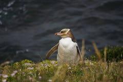 Pingouin observé par jaune Image libre de droits