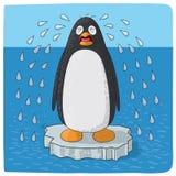 Pingouin pleurant pour le changement climatique Photographie stock libre de droits