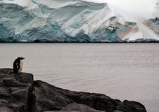 Pingouin seul Images stock
