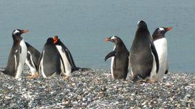 pingouins Photos libres de droits