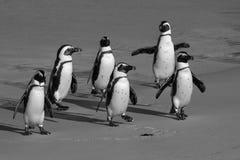 pingouins Photo libre de droits