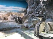 pingouins Image stock