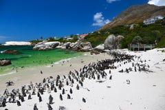 Pingouins africains à la plage de rochers située dans Simon& x27 ; ville Cape Town, Afrique du Sud de s image libre de droits