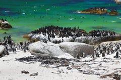 Pingouins africains à la plage de rochers située dans Simon& x27 ; ville Cape Town, Afrique du Sud de s photographie stock