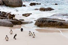pingouins africains Noir-aux pieds sur la plage photographie stock libre de droits