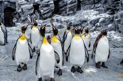 Pingouins au zoo d'Asahiyama photo libre de droits