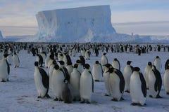 Pingouins d'empereur Photo libre de droits