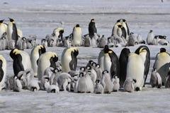 Pingouins d'empereur avec le poussin Photo libre de droits