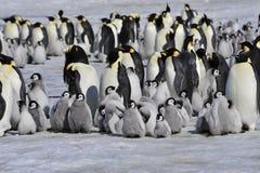 Pingouins d'empereur avec le poussin Photos stock