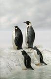 Pingouins d'empereur sur l'horizontal arctique Image libre de droits