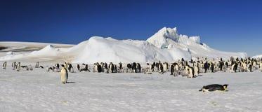 Pingouins d'empereur sur la glace Photographie stock
