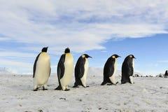Pingouins d'empereur sur la neige Photographie stock