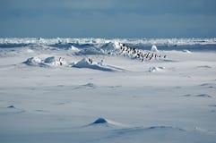 Pingouins dans l'icescape photographie stock