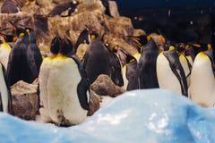 Pingouins dans le zoo Photo libre de droits