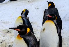 Pingouins dans le zoo du Japon Photos libres de droits