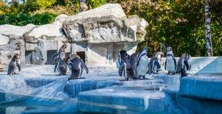 Pingouins dans un zoo image stock