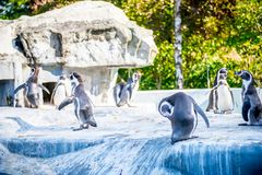 Pingouins dans un zoo photos libres de droits