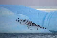 Pingouins de Chinstrap se reposant sur l'iceberg, Antarctique Images stock