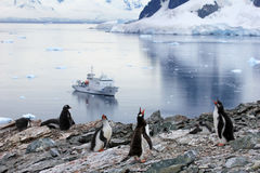 Pingouins de Gentoo devant un bateau de croisière antarctique, péninsule antarctique Image stock