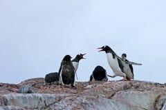 Pingouins de Gentoo, Pygoscelis Papouasie, péninsule antarctique Photo stock