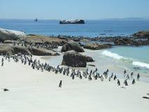 pingouins de rocher de plage Image stock