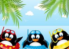 Pingouins drôles de natation Photos libres de droits
