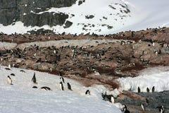 Pingouins en Antarctique Image libre de droits